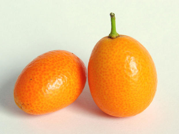 Kumquat Season…. don't you just love this time of year ?